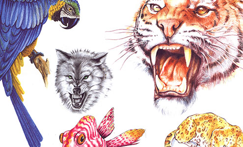 Animals Design Tattoos